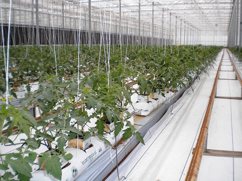 Make Your Greenhouse More Efficient